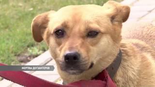 Догхантеры убивают не только собак