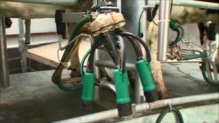 GEA Dairy Farming - Découvrez le système automatisé de trempage et désinfection IQ Apollo