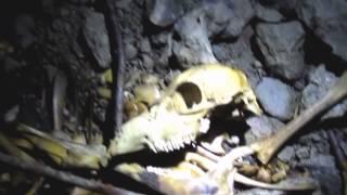 Neuvostoaikainen piilotettu bunkkeri (luuranko)