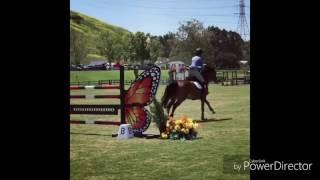 Horse/Trees Twenty one pilots/ лошади/ конный спорт/ конкур и выездка/ клип про лошадей/ лошадки