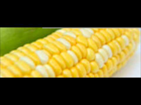 Monsanto GM Corn Crops Collapsing in NW Illinois---plants falling over, stock price falls
