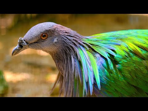 Most Beautiful Birds on Planet Earth
