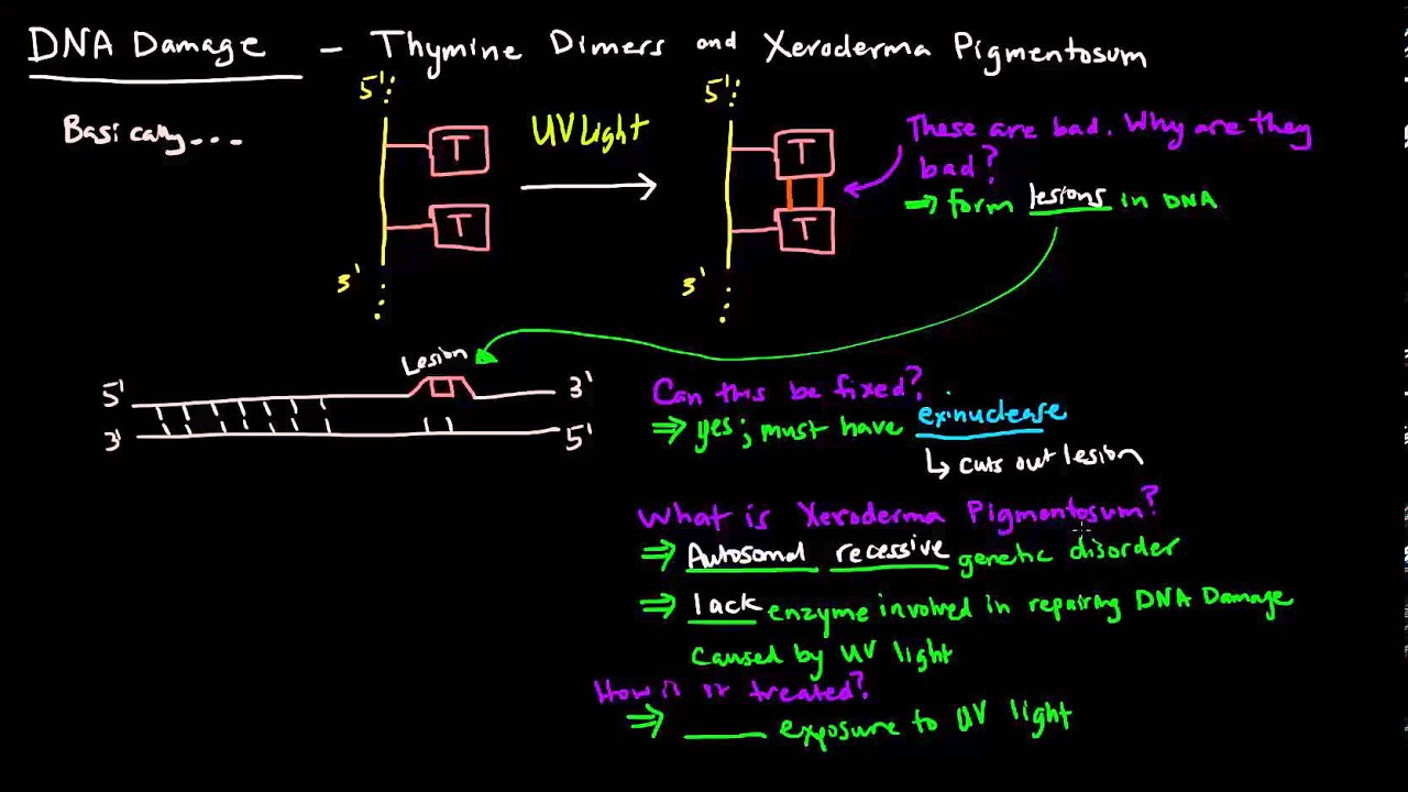 Diagram Thymine