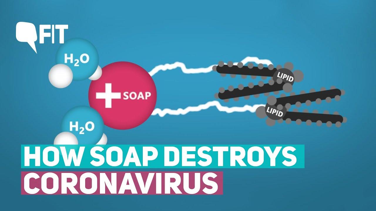 How Soap Destroys Coronavirus | The Quint - YouTube