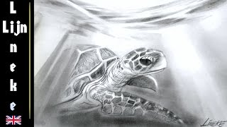 Drawing a SEA TURTLE under water  graphite easy for beginners