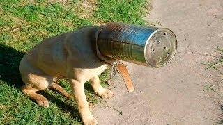 Animal Fails of the Week 4 August 2017 - Animal Fails Compilation 2017