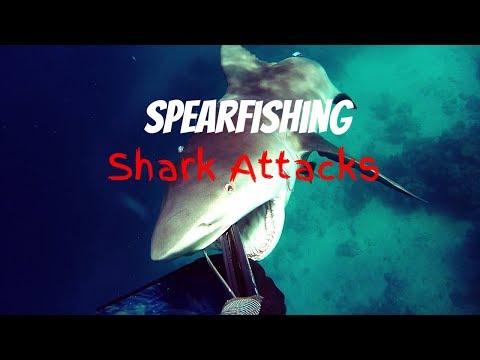 Top 5 Spearfishing Shark Attacks