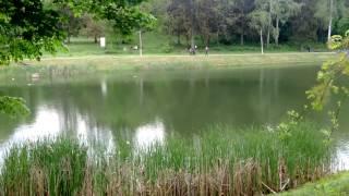 Феофания. Киев. Природа. Лягушки. Озеро. Отдых с детьми(ДЕТСКИЙ ЛАГЕРЬ