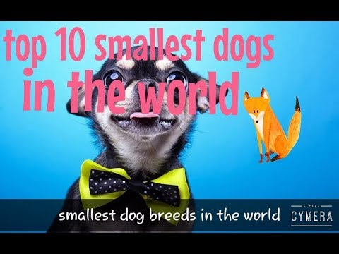 Top 10 smallest dogs | smallest dog breeds