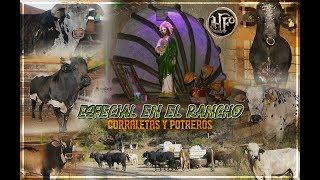 especial-en-el-rancho-rancho-la-misin-corraletas-y-potreros