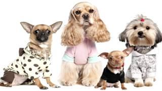 Одежда для собак интернет!