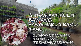 Download lagu CARA MEMBUAT PESTISIDA NABATI DARI KULIT BAWANG | PESTICIDE & FERTILIZER FROM ONION PEEL