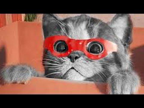 My Favorite Cat Little Kitten - Play Fun Cute  #110