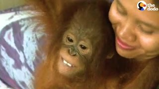 These Orphaned Orangutans Are Getting Raised In A Nursery