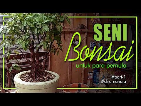 seni-bonsai-untuk-pemula