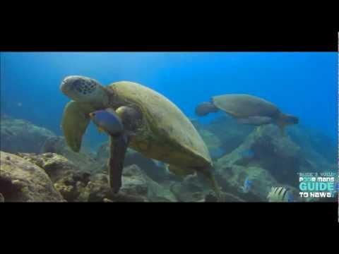 """UNDER THE SEA HAWAII HD """"Waydes World Hawaii"""""""