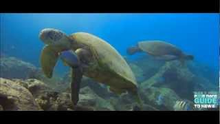 "UNDER THE SEA HAWAII HD ""Waydes World Hawaii"""