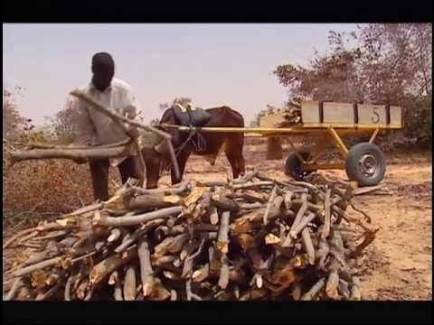 People & Trees - The Sahel