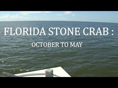Stone Crabbing: October to May