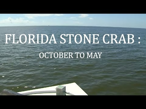 Florida Stone Crab: October To May