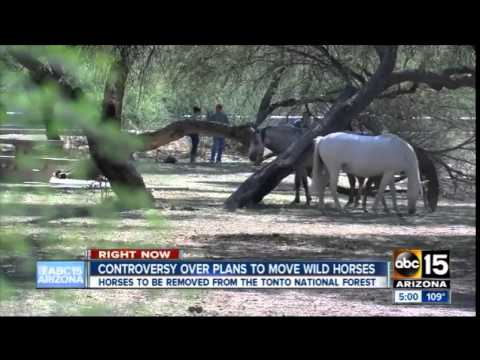 ABC 15 Salt River Wild Horses
