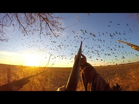 Goose Hunting Late Season On The X 2017
