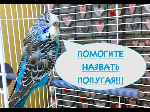 Имена для попугаев womanadviceru