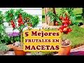 Los 5 Mejores Árboles Frutales para Cultivar en Macetas - Cuidando el Jardín