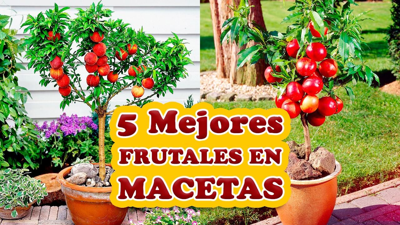 Los 5 mejores rboles frutales para cultivar en macetas for Arboles frutales para jardin