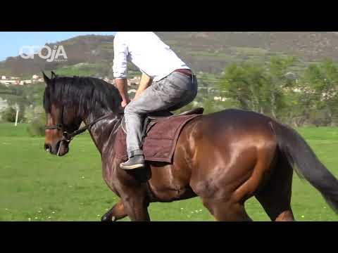 """Kronikë për kalin """"DIKTAT"""" në Opojë"""