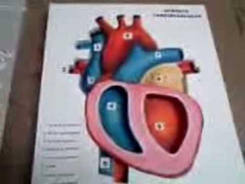 Maqueta del Corazón - YouTube