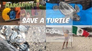 SAVING BABY TURTLES in Mexico VLOG ||