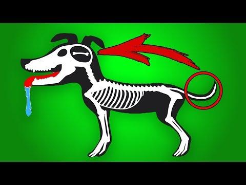 Могут ли у собаки болеть мышцы какая реакция