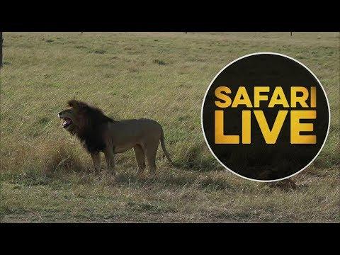 safariLIVE - Sunset Safari - August 6, 2018 (Part 1)