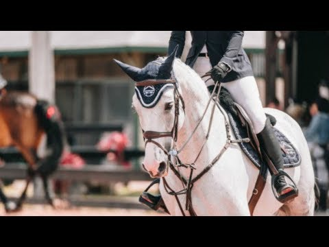 Symphony || Equestrian Music Video