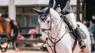 Symphony || Equestrian Music Video