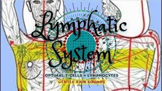 Powerful Lymphatic System Healing - Gentle Rain Sounds