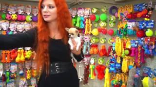 Первые покупки для щенка