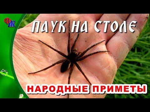 Суеверные приметы про пауков, главное не убегать