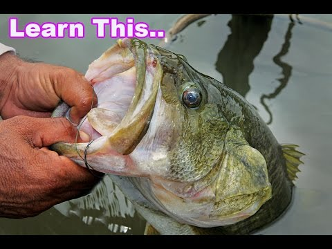 You Got To Learn This Technique For Catching Bass Deep - How To Fishing Tips Jacob Wheeler