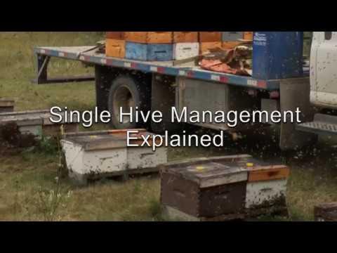 Single Hive Management Explained