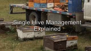 Single Hive Management Explained Video