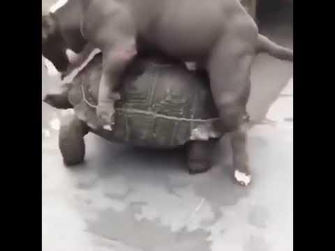Zoo Pornos