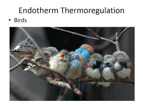 Thermoregulation: Endotherms and Ectotherms