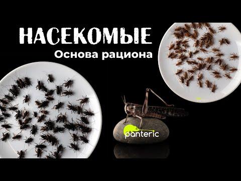 Чем кормить насекомоядных рептилий? Основа рациона хищных ящериц и амфибий