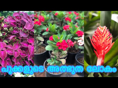 Mannuthy Madakkathara Flowers Nursery|National Rose Gardens Flowers|Part-2