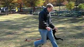 Frogs To Dogs Basic Obedience Training Demo