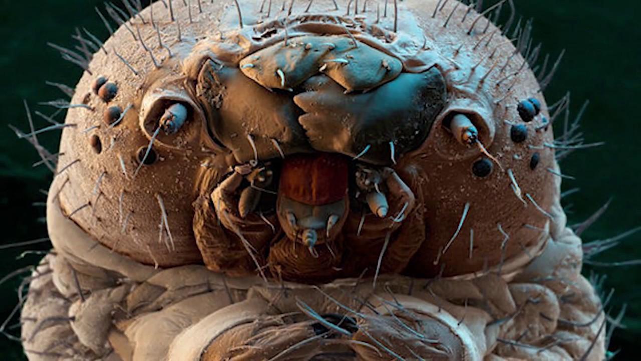 parazitaellenes szerek a demodex számára
