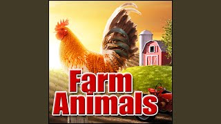 Barn, Ambience - Barn Ambience: Ext: Small Group of Goats and Sheep, Foot Movement, Farm Farm,...