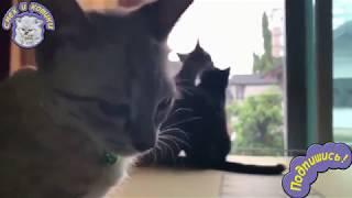 Когда Любимая С Другим | Кот - Романтик